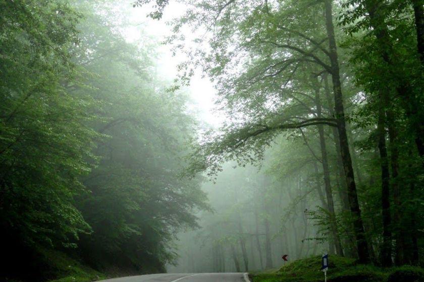 جنگل دو هزار تنکابن