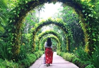 singapore botanic gardens orchid garden 320x220 - باغ های گیاه شناسی سنگاپور | Singapore