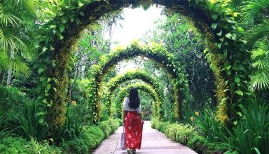 singapore botanic gardens orchid garden 384x220 - باغ های گیاه شناسی سنگاپور | Singapore
