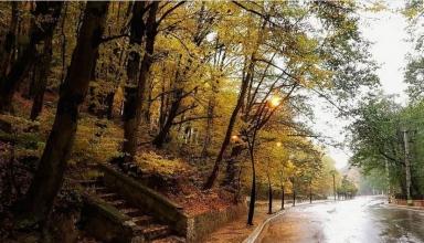 55 1 384x220 - ناهارخوران گرگان ، جنگل زیبای استان گلستان | Gorgan