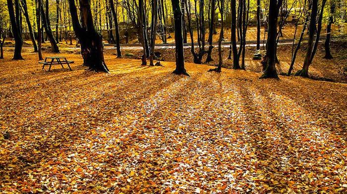 پارک جنگلی النگدره