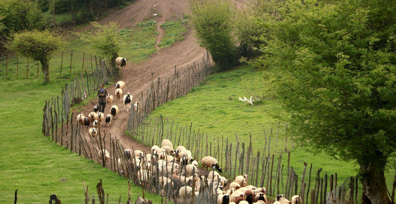 6 - روستای استخرگاه ، رودبار   گیلان