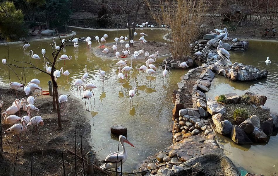 2anhr7pYXqtbN1xc 1520675172795 - باغ پرندگانتهران   Tehran