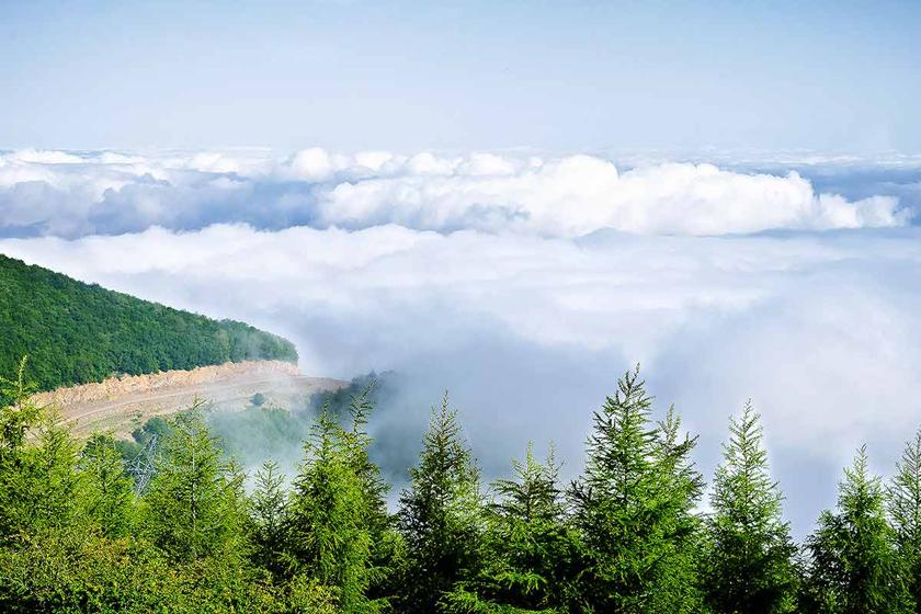 1e74a21f ef04 469b 9100 7107b590e74e - جنگل ابر ، جنگلی در میان ابرها | شاهرود
