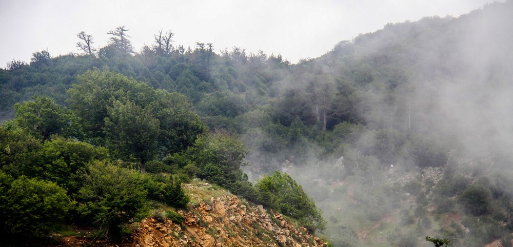 393739 155 - جنگل ابر ، جنگلی در میان ابرها | شاهرود
