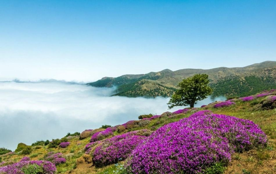 d0OI4o4hnP2GIJIf 1520429383290 - جنگل ابر ، جنگلی در میان ابرها | شاهرود