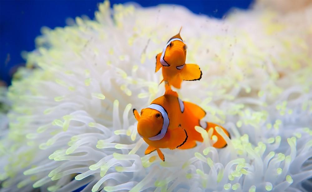 دنیای زیر آب پاتایا