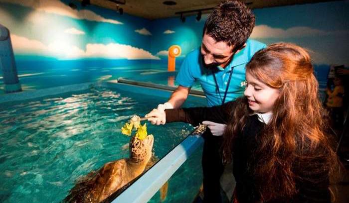 istanbul aquarium animal 1 - آکواریوم استانبول ، ترکیه   Istanbul