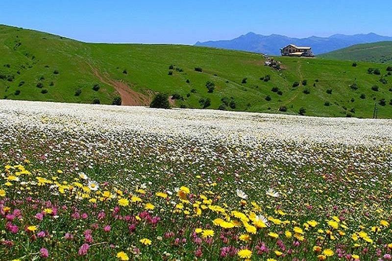 N83011249 72508966 - جنگل فندقلو نمین ، اردبیل | Ardabil