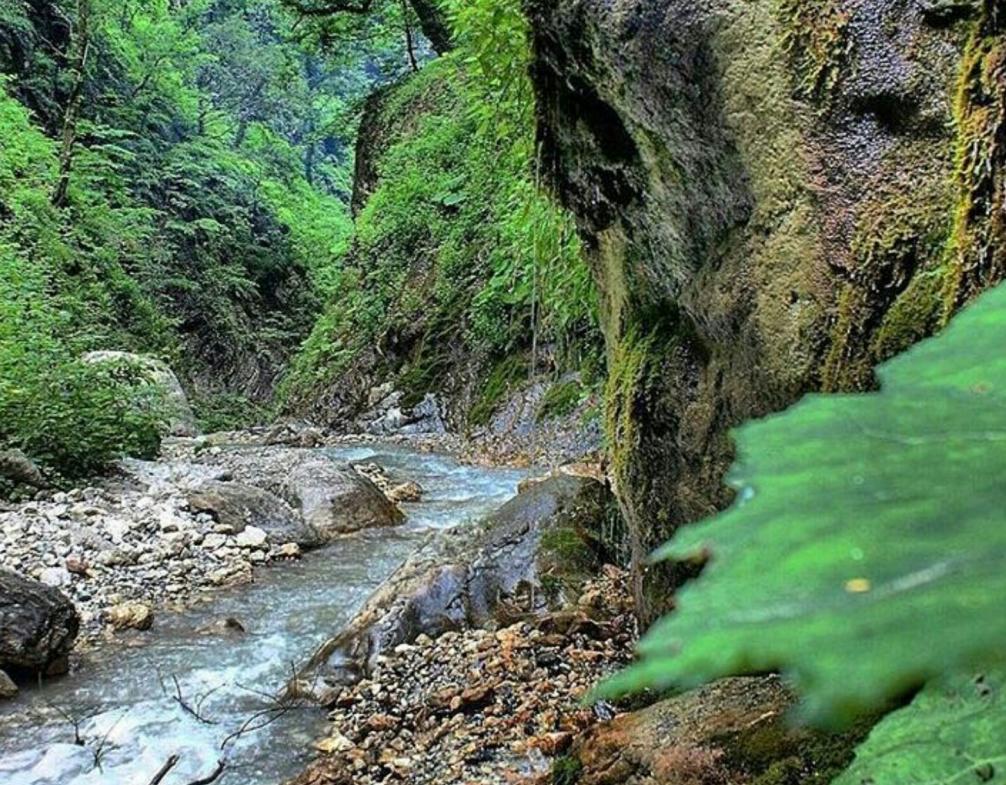 2016 08 15 00 55 03 1007x1024 e1575969941945 - جنگل شصت کلا ، گرگان | Gorgan