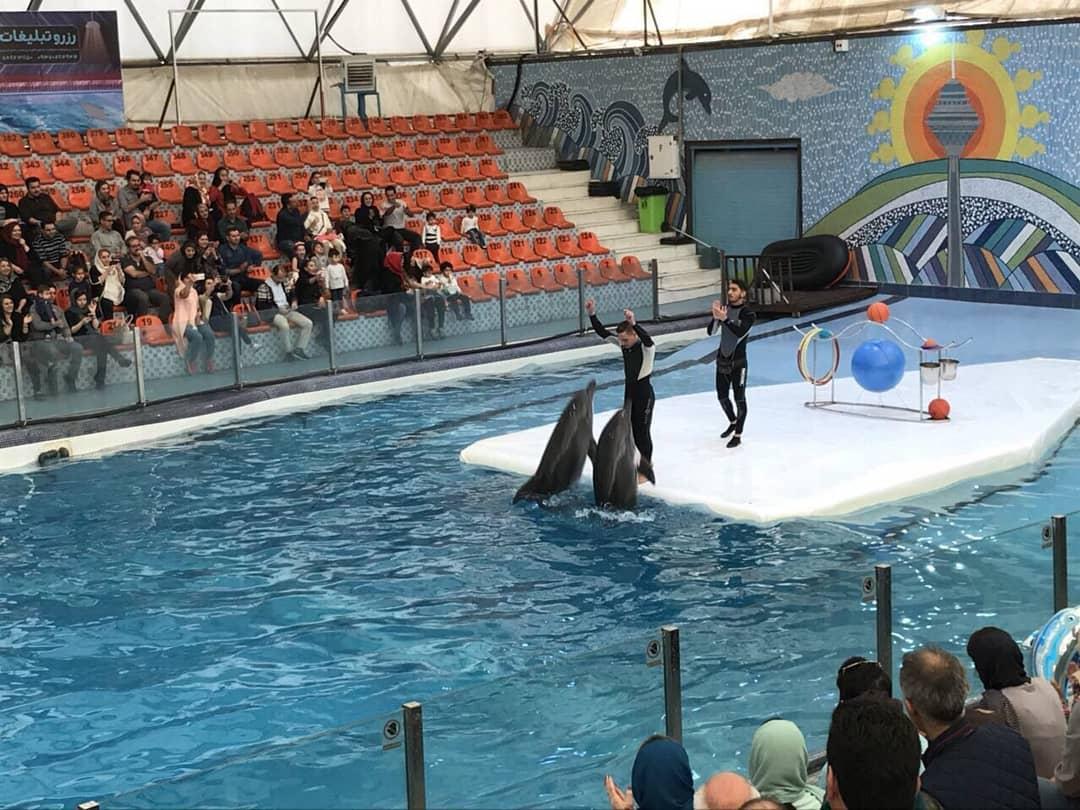 2376002 - پارک دلفین یا دلفیناریوم کیش | Kish