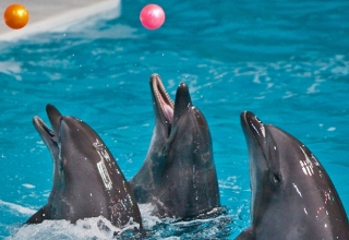 Dolfin2 320x220 - پارک دلفین یا دلفیناریوم کیش | Kish