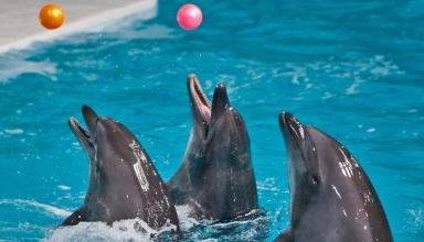 Dolfin2 384x220 - پارک دلفین یا دلفیناریوم کیش | Kish