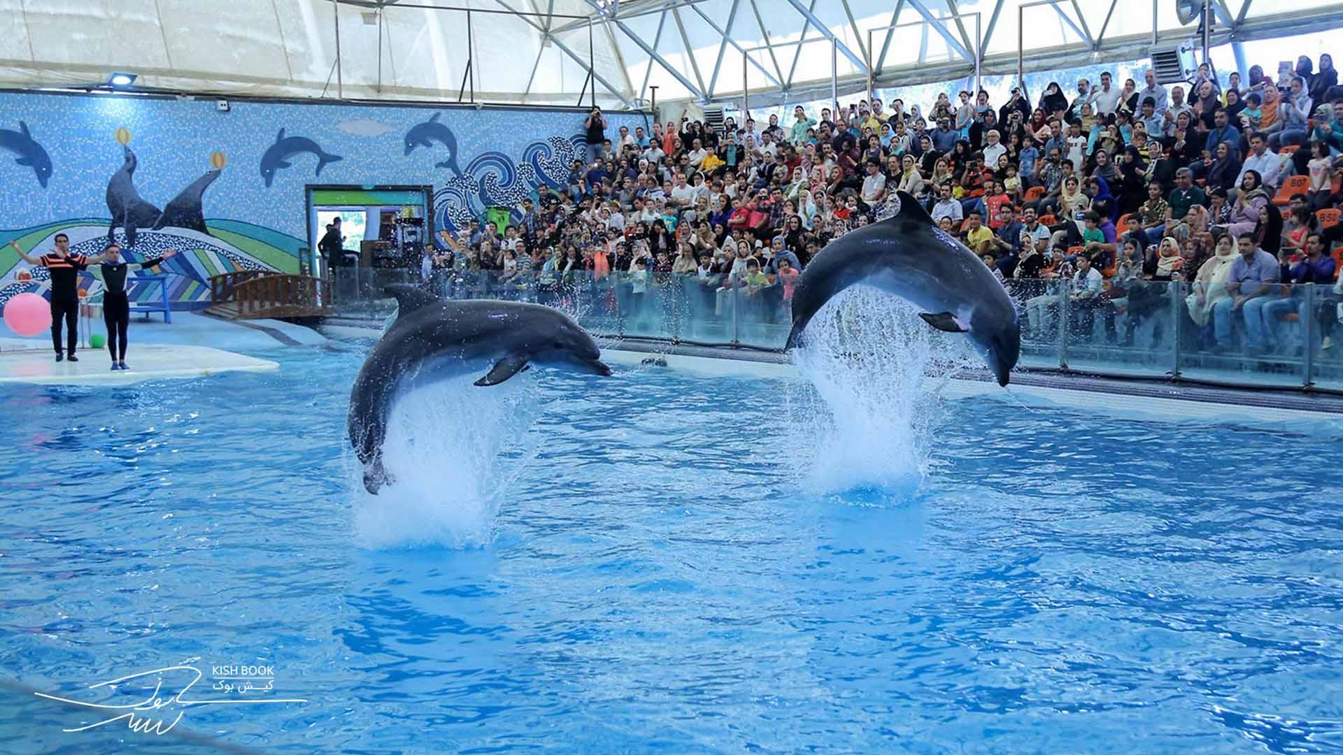 dolphinarium kish - پارک دلفین یا دلفیناریوم کیش | Kish