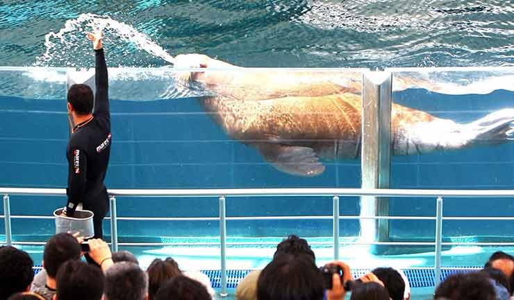 fook2 - پارک دلفین یا دلفیناریوم کیش | Kish