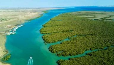 های حرا در هرمزگان 1 384x220 - پارک ملی نایبند ، اولین پارک ملی دریایی کشور | Bushehr