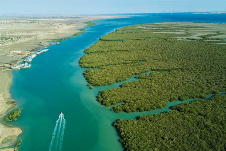 های حرا در هرمزگان - پارک ملی نایبند ، اولین پارک ملی دریایی کشور | Bushehr