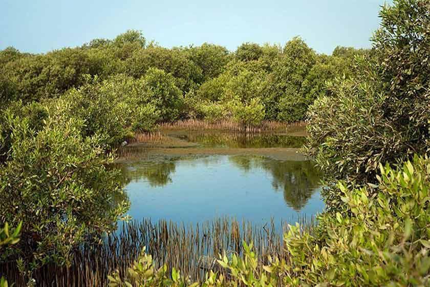 e3d56ec4 8d43 4fc8 92d2 b7e8552f3bc3 - پارک ملی نایبند ، اولین پارک ملی دریایی کشور | Bushehr
