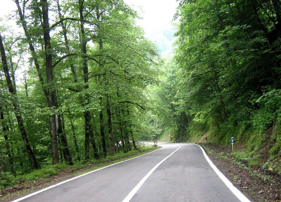 جنگل عباس آباد چالوس