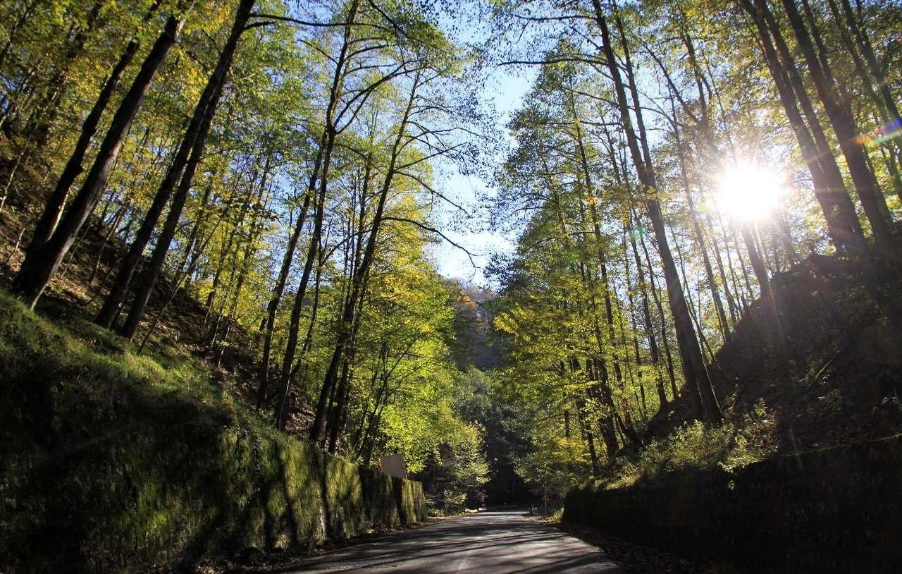 جاده عباس آباد به کلاردشت در پاییز