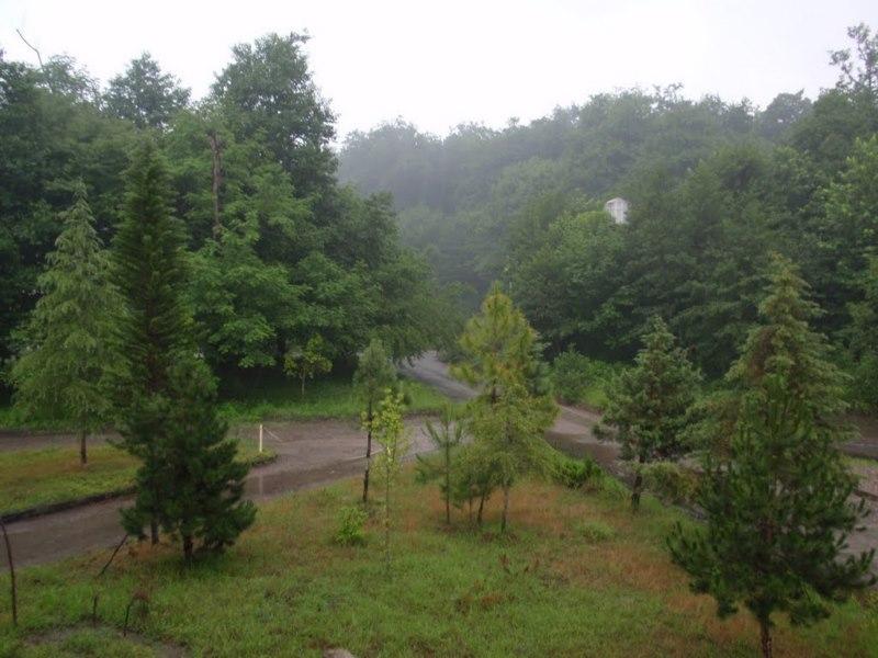 جنگل تیلاکنار متل قو