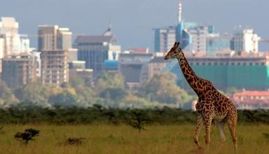 جاهای دیدنی نایروبی