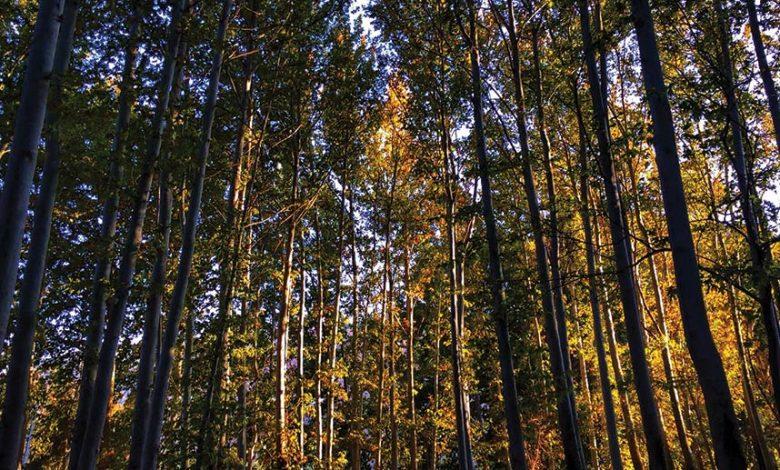 پارک جنگلی دورود