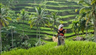 دیدنی های ابود بالی