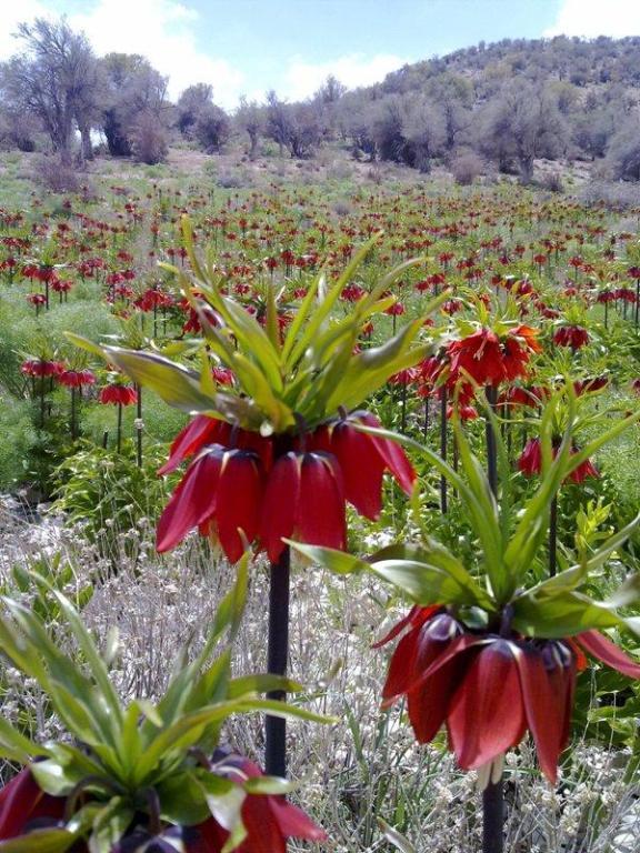 کوه برز و منطقه سیاهچال فیروزآباد