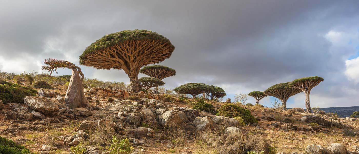 جزیره سقطری یمن