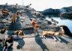 جزیره گربه ها در ژاپن