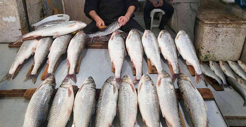 بازار ماهی فروشان رامسر