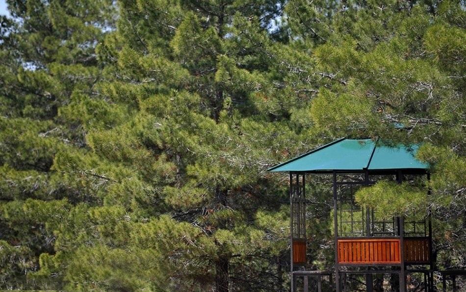 پارک جنگلی یاس تهران