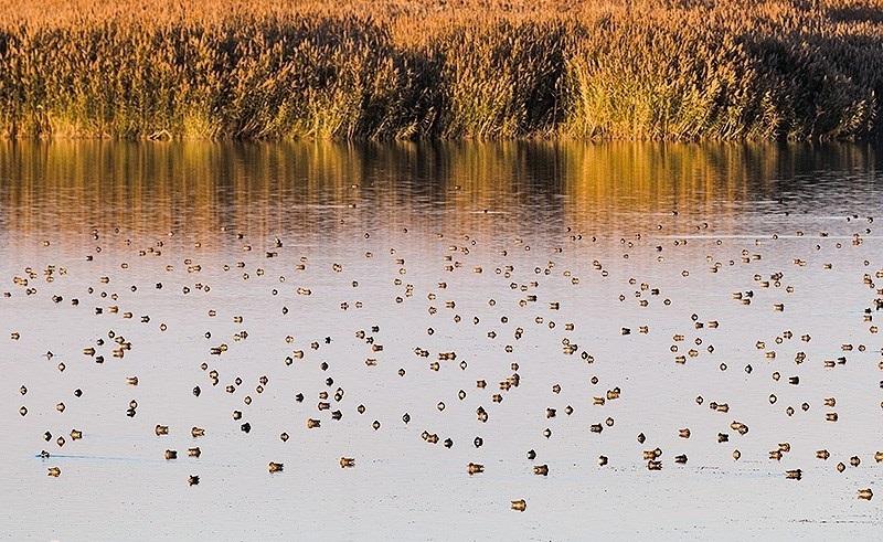پارک ملی دریاچه ارومیه - منبع: تسنیم (Photo: Mojtaba Esmaeil Zad)